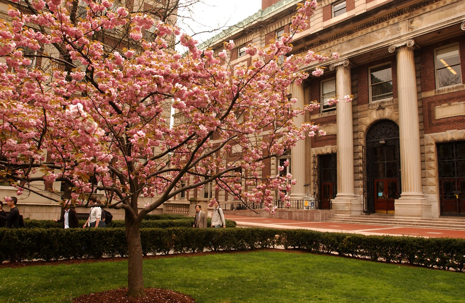 C.V. Starr Library and Kent Hall in spring